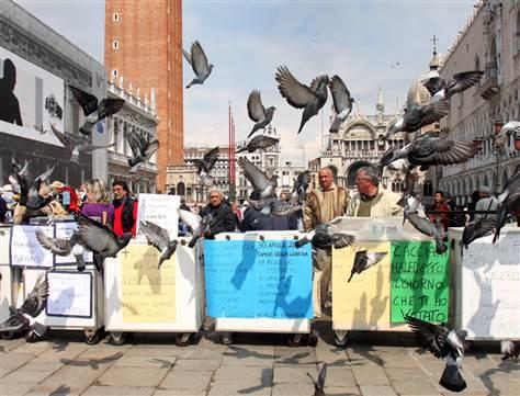 pigeon protest
