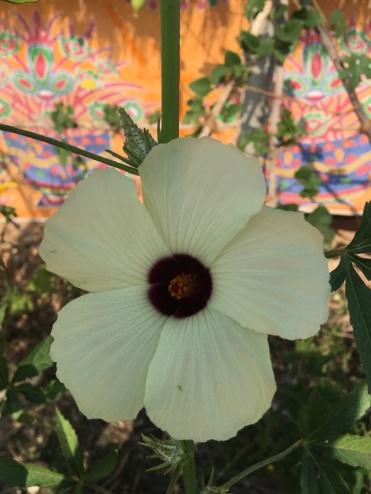 indiaflower2